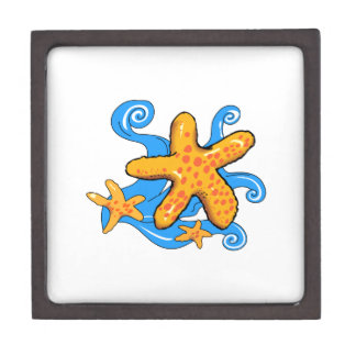 Starfish Premium Gift Box