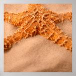 Starfish Print