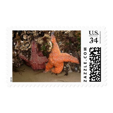 Beach Themed Starfish/Sea Stars at Haystack Rock, OR, Photo 3 Postage