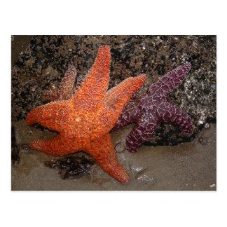 Starfish/Sea Stars, Cannon Beach OR, Photo 1 Postcard