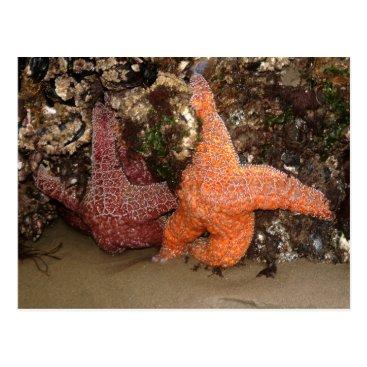 Beach Themed Starfish/Sea Stars, Cannon Beach OR, Photo 3 Postcard