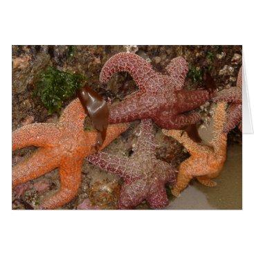 Beach Themed Starfish/Sea Stars in Cannon Beach, OR, Photo 4 Card