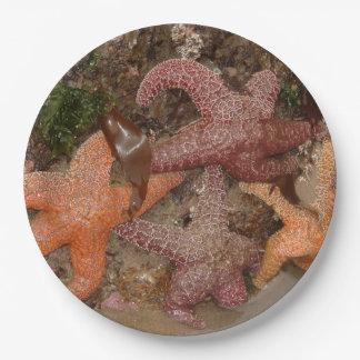 Starfish/Sea Stars in Cannon Beach, OR, Photo 4 Paper Plate