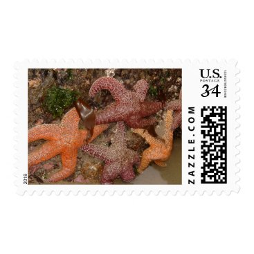 Beach Themed Starfish/Sea Stars in Cannon Beach, OR, Photo 4 Postage
