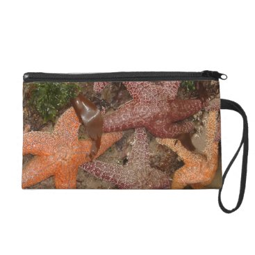 Beach Themed Starfish/Sea Stars in Cannon Beach, OR, Photo 4 Wristlet