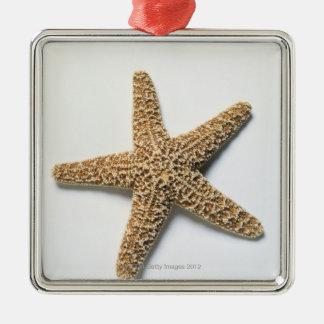 Starfish shell on white background ornament