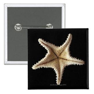 Starfish skeleton, close-up 2 pinback button