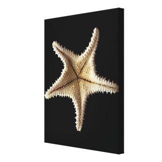 Starfish skeleton, close-up 2 canvas print