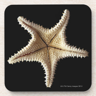 Starfish skeleton, close-up 2 coaster