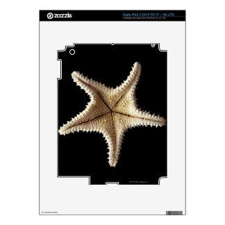 Starfish skeleton, close-up 2 iPad 3 skins