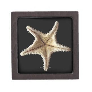 Starfish skeleton, close-up 2 keepsake box