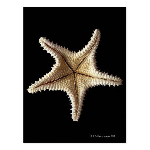 Starfish skeleton, close-up 2 post cards