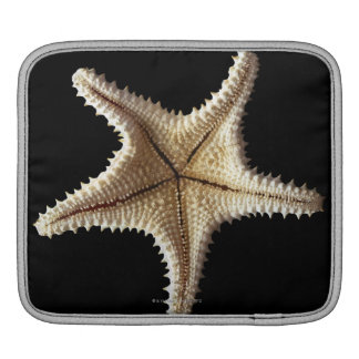 Starfish skeleton, close-up 2 sleeve for iPads