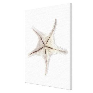 Starfish skeleton, close-up gallery wrap canvas