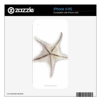 Starfish skeleton, close-up iPhone 4 decal