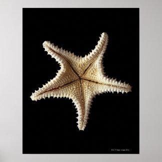 Starfish skeleton, close-up poster