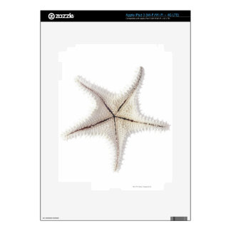 Starfish skeleton, close-up skin for iPad 3