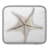Starfish skeleton, close-up sleeve for iPads