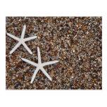 Starfish skeletons on Glass Beach Post Card