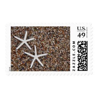 Starfish skeletons on Glass Beach Postage