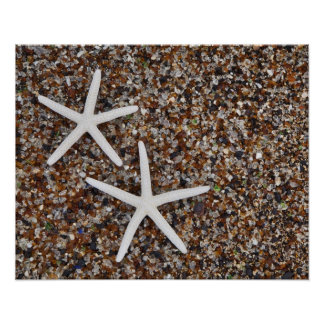 Starfish skeletons on Glass Beach Posters