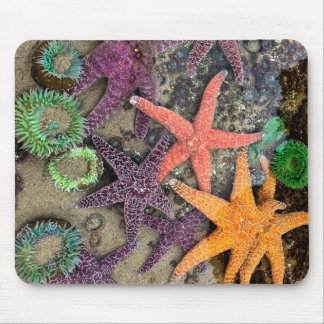 Starfish, the Gems of the sea Mouse Pad