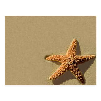 Starfish Tropical Event And Wedding Invitation Postcards
