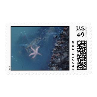 Starfish U.S. Postage Stamp