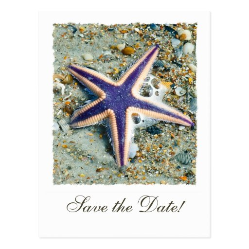 Starfish Wedding Save the Date Postcard