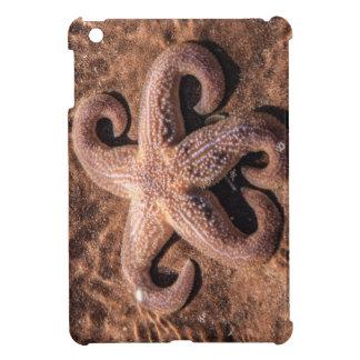 Starfish with Curly Legs iPad Mini Case