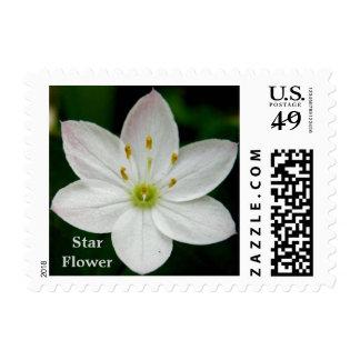 Starflower ártico (europaea de Trientalis) Sello