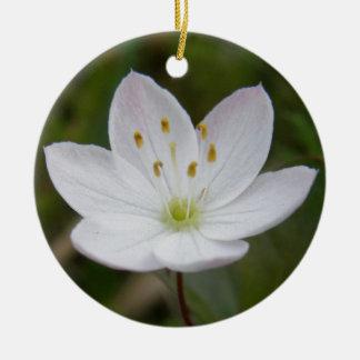 Starflower europaea de Trientalis Ornatos