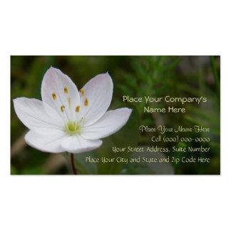 Starflower, europaea de Trientalis Plantillas De Tarjetas Personales