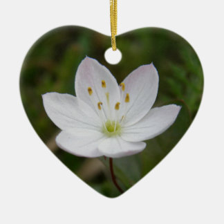 Starflower, Trientalis europaea Ceramic Ornament
