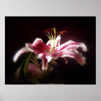 stargazer lilies #15 poster