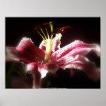 stargazer lilies #16 poster