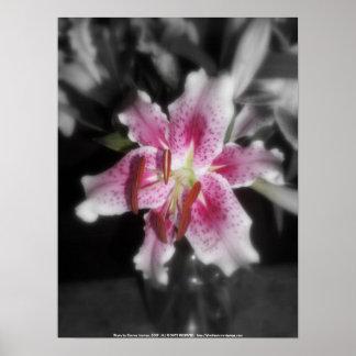 stargazer lilies #3 poster