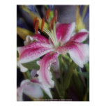 stargazer lilies #6 poster