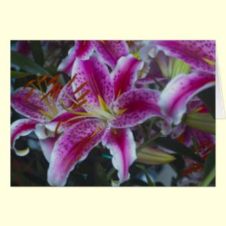 Stargazer Lilies Pink & Magenta Cards