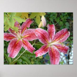 Stargazer Lilies Print