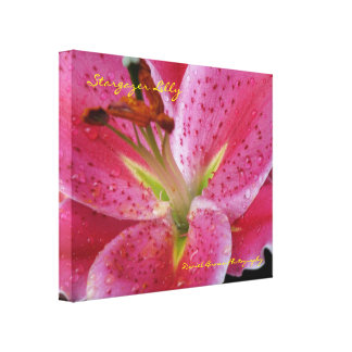 Stargazer Lilly Wrapped Canvas Gallery Wrap Canvas