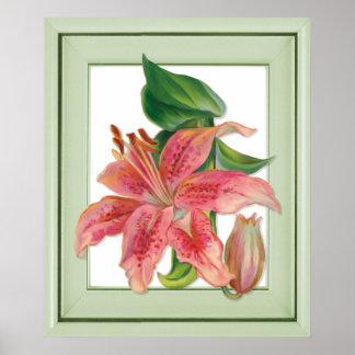 Stargazer Lily Botanical Poster