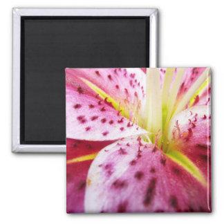 Stargazer Lily Bright Magenta Floral Magnet
