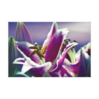 Stargazer Lily Stretched Canvas Prints