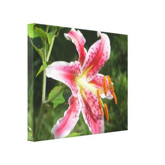 Stargazer Lily Gallery Wrap Canvas