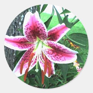 Stargazer Lily Classic Round Sticker