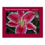 Stargazer Lily Inspirational Postcard