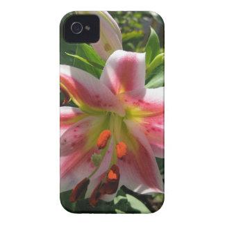 Stargazer Lily Iphone 4 Case