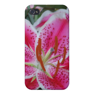 Stargazer Lily iPhone 4 Covers