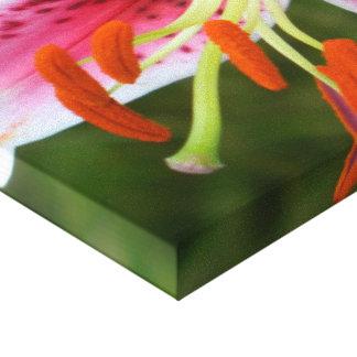 Stargazer lily Ipod Case Canvas Prints
